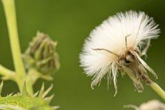 Cierre del tema de la naturaleza para arriba de la flor suave blanca en fondo verde Foto de archivo