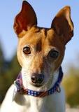Cierre del terrier de Fox del juguete encima de la foto Foto de archivo libre de regalías