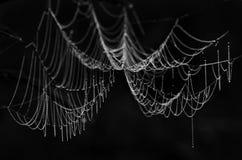 Cierre del web de araña para arriba en rocío en fondo negro Fotografía de archivo