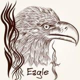 Cierre dibujado mano del águila del vector del vector encima del avión Fotos de archivo libres de regalías