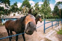 Cierre divertido del caballo de Brown encima de la cabeza Fotos de archivo
