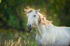 Cierre divertido del caballo encima del retrato imagenes de archivo