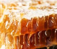 Cierre dulce del panal para arriba, productos de la abeja por concepto natural orgánico de los ingredientes imagenes de archivo