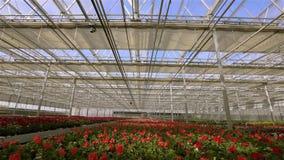 Cierre en el invernadero, el proceso del tejado del lapso de tiempo de cerrar el tejado de cristal en un invernadero moderno gran almacen de metraje de vídeo