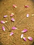 Cierre encima de floweron el piso Foto de archivo libre de regalías