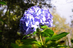 Cierre encima de/foco en la flor púrpura en el jardín, fondo abstracto de la naturaleza Imagen de archivo