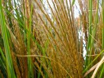 Cierre encima de la hierba del pantano de la visión imagenes de archivo