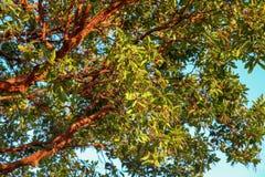 Cierre encima de la rama roja y de la hoja verde en el cielo azul fotos de archivo