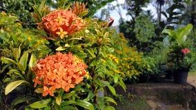 Cierre encima de los papeles pintados la flor anaranjada dos imagenes de archivo