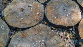 Cierre encima de od Choped de madera en círculos, hojas y rocas en la tierra Papel pintado del fondo natural foto de archivo libre de regalías
