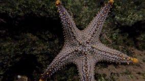 Cierre encima de pescados de la estrella en acuario metrajes