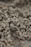 Cierre encima del CANGREJO del FANTASMA, agujeros de excavación en la arena de la playa fotos de archivo libres de regalías