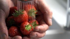 Cierre encima del hombre que lava las fresas frescas almacen de video