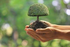 Cierre encima del hombre que sostiene la planta verde a disposición, amamos el mundo de ideas fotos de archivo libres de regalías