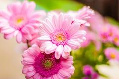 Cierre fúnebre de la guirnalda de las flores rosadas para arriba Imagen de archivo