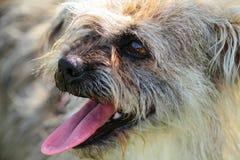 Cierre feliz de la cabeza de perro para arriba Foto de archivo libre de regalías