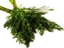 Cierre fresco de la hierba del eneldo del manojo para arriba Imagen de archivo