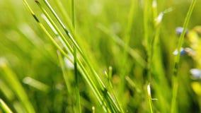 Cierre fresco de la hierba para arriba en rayos del sol metrajes