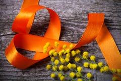 Cierre fresco de la mimosa de la primavera para arriba con la cinta anaranjada en la madera gris vieja Imagenes de archivo