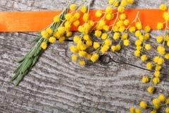 Cierre fresco de la mimosa de la primavera para arriba con la cinta anaranjada en la madera gris vieja Imagen de archivo