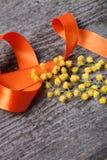 Cierre fresco de la mimosa de la primavera para arriba con la cinta anaranjada en la madera gris vieja Fotografía de archivo