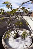 Planta del invierno con horizonte en el pueblo del oeste Manhattan Nueva York Imagenes de archivo
