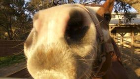 Cierre granangular para arriba del caballo Foto de archivo libre de regalías