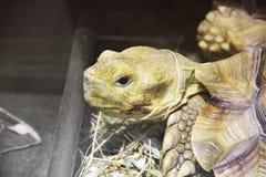 Cierre grande de la tortuga para arriba foto de archivo libre de regalías