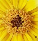Cierre grande para arriba en la flor hermosa imagen de archivo libre de regalías