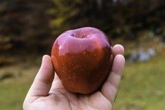 Cierre hermoso de la manzana encima de lleno de color del pueblo de Sirnea en B imagenes de archivo