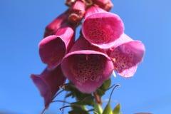 Cierre hermoso encima de la foto macra de la flor rosada imagen de archivo
