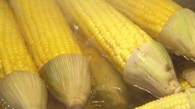 Cierre hervido del maíz en la mazorca para arriba metrajes