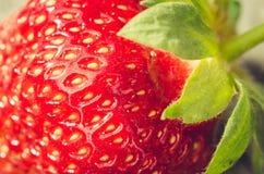 cierre jugoso maduro fresco de la fresa encima del cierre jugoso maduro de la fresa de /fresh para arriba Postre Alimento gastrón fotografía de archivo libre de regalías