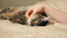 cierre 4K encima de las manos de los juegos de la muchacha con el gato de gato atigrado lindo el dormir metrajes