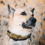 Cierre mezclado del perro de Brown de la talla media de la raza para arriba fotos de archivo