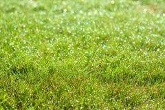 Cierre mojado de la hierba verde encima del fondo Foto de archivo