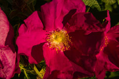 Cierre púrpura de la flor encima de la visión Árbol en campo Fotografía de archivo