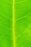 Cierre para arriba de la licencia verde Foto de archivo libre de regalías
