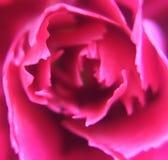 Cierre para arriba de una flor Imagen de archivo libre de regalías