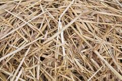 Cierre para arriba del fondo de la textura de la paja de la hierba secada Imagen de archivo