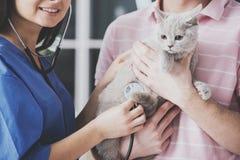Cierre para arriba El hombre joven sostiene el gato en brazos en la recepción fotografía de archivo libre de regalías