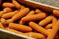 Cierre para arriba el maíz en una caja de madera foto de archivo