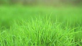 Cierre para arriba la hierba en llover la cámara del movimiento del descenso metrajes