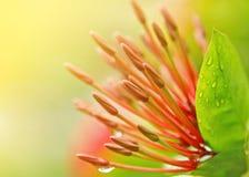 Cierre rojo del estambre de la flor para arriba Imágenes de archivo libres de regalías