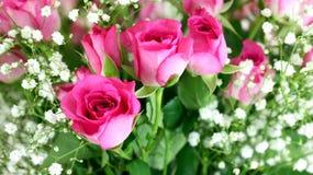 Cierre rosado del ramo de las rosas para arriba Foto de archivo