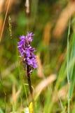 Cierre salvaje de la orquídea para arriba Foto de archivo