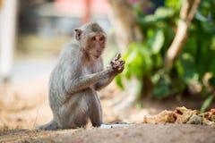 Cierre salvaje del mono para arriba imagenes de archivo