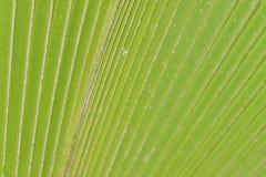Cierre tropical de la palmera encima del copia-espacio Imagen de archivo libre de regalías