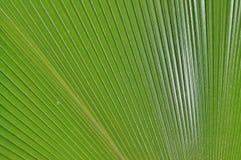 Cierre tropical de la palmera encima del copia-espacio Imágenes de archivo libres de regalías
