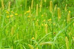 Cierre verde claro de la hierba para arriba Foto de archivo
